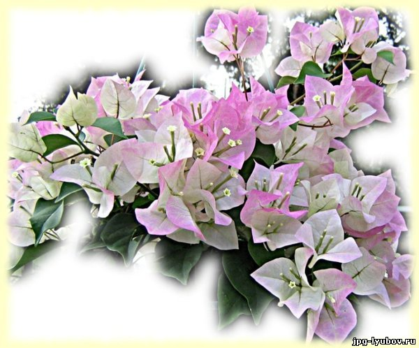 Антуриум из бисера: цветы герберы фото.